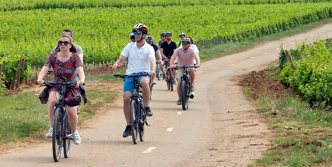 Ballade à vélos dans les vignes